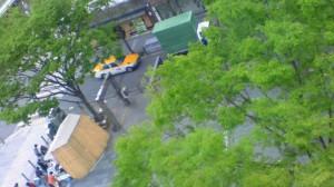 静岡市葵区 青葉通り公園のケヤキ